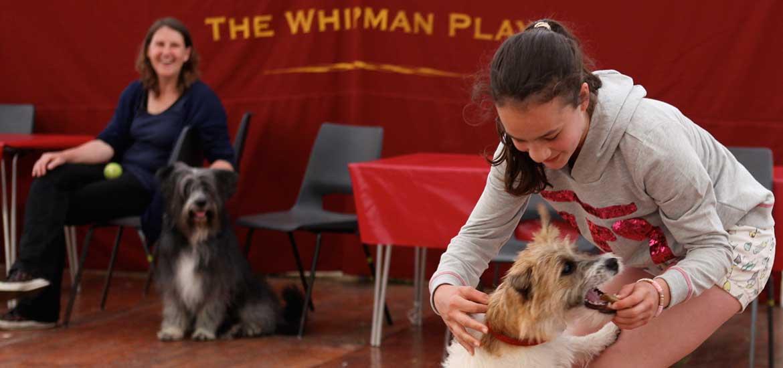 2014 Whipman Dog Show